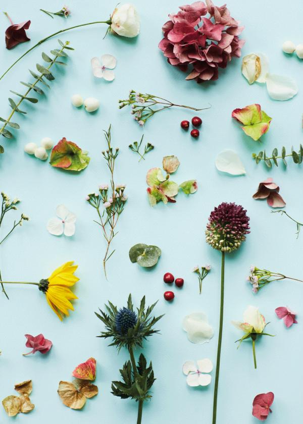 Blue flower compilation - Blomster plakat