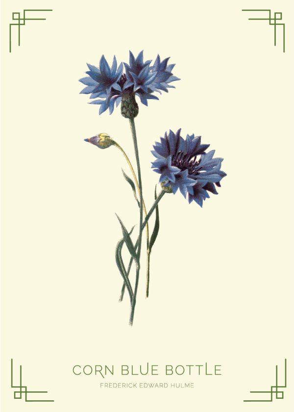 Corn blue bottle - Frederick Edward Hulme retro naturplakater