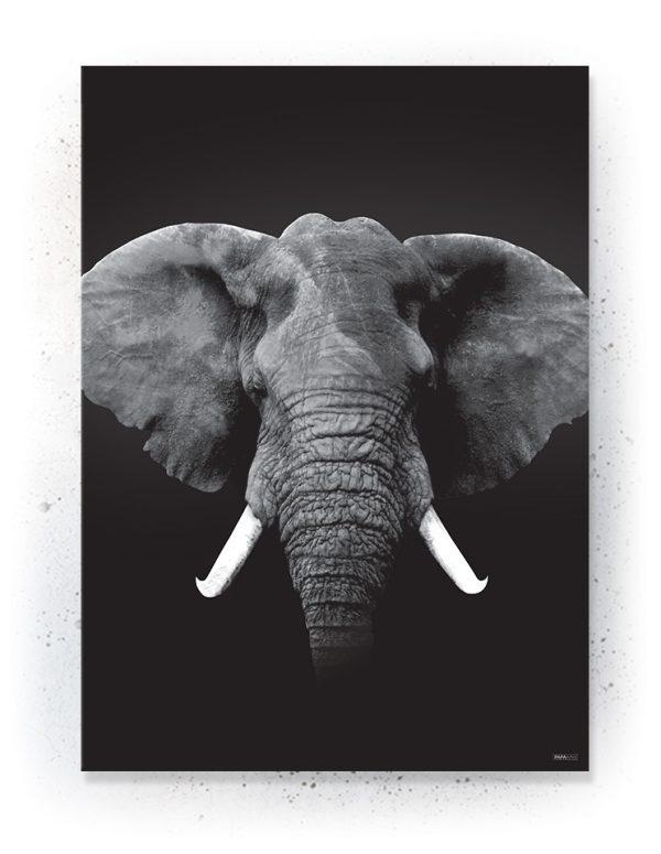 Plakat / Canvas / Akustik: ELEFANT (Animals)