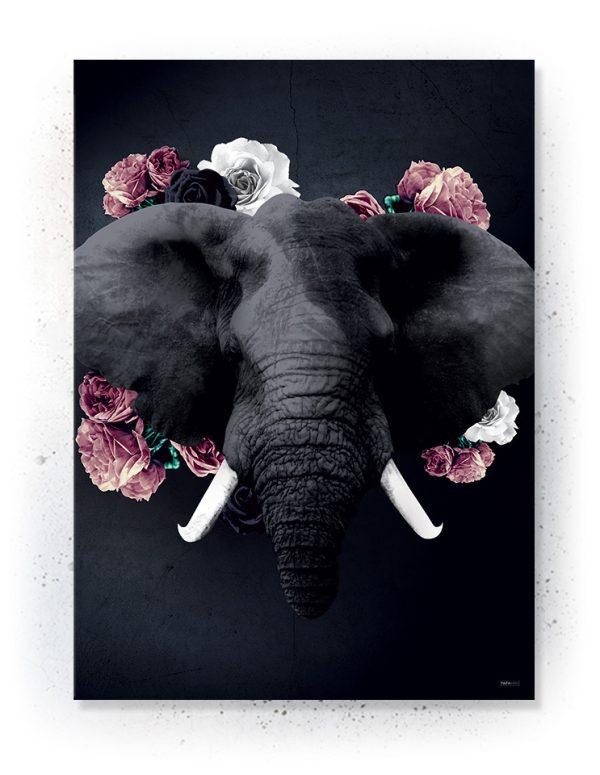 Plakat / canvas / akustik: Elefant (Desire)