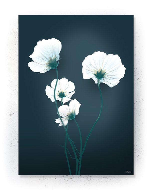 Plakater / Canvas / Akustik: Blå valmue blomst (Eclectic)